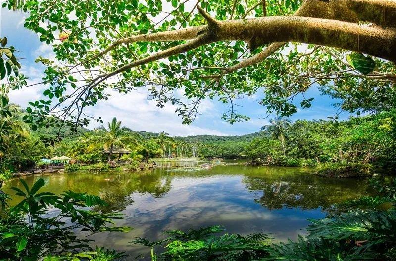 呀诺达热带雨林4.jpeg